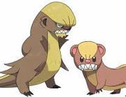 I Pokemon Yungoos e Gumshoos